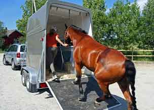 horse trailer horsebox insurance